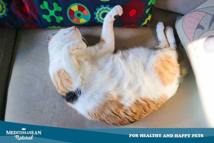 ¿Cuánto tiempo duerme un gato? ¿Por qué puede cambiar su patrón de sueño?